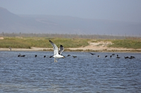Omani Stock Photo of Birds, Wildlife, Nature