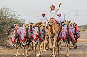 Omani Stock Photo of Camel , Arab